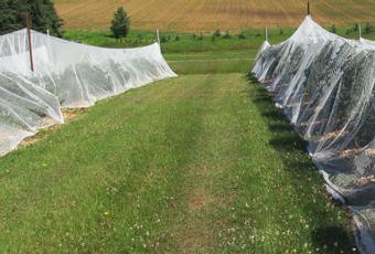 Bird netting plot