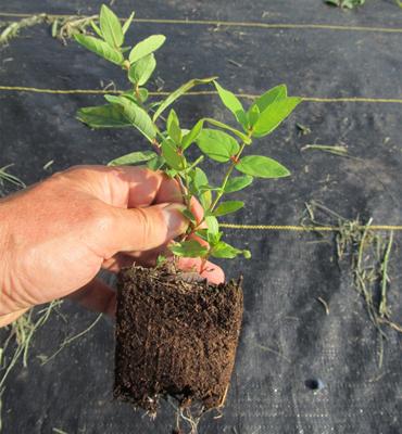 Seedling plants