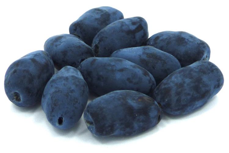 Indigo Gem berries