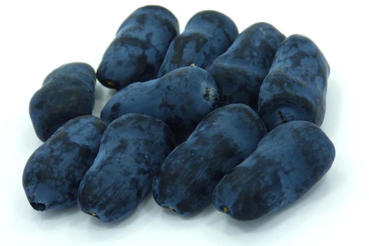 Indigo Treat berries
