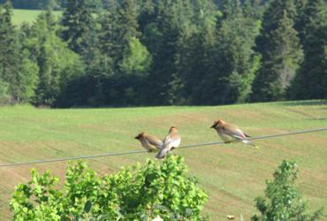 Pest Control Birds