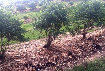 Weed Control Mulch